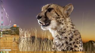 非洲草原动物win7电脑主题下载