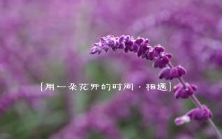 一朵花开的时间相遇xp主题