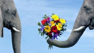 大象的爱xp主题
