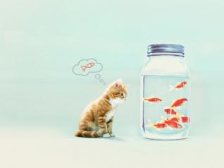 幸福就是猫吃鱼xp主题