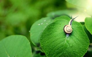 蜗牛xp主题