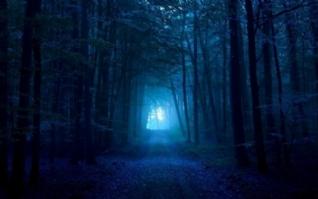 夜幕下的树林图片电脑桌面壁纸