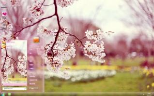 唯美樱花摄影主题