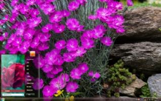 唯美植物风景主题win7主题