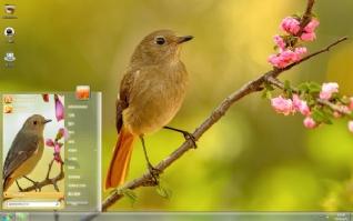 鸟类北红尾鸲可爱主题