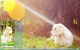 白色忧伤狗狗可爱主题