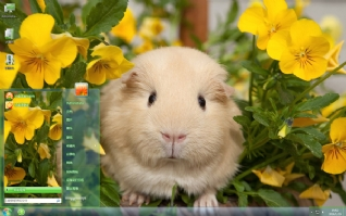 萌宠荷兰猪可爱主题