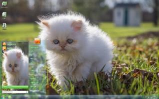 萌宠可爱猫咪主题