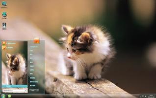可爱小猫咪卖萌主题
