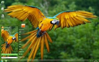 动物世界鹦鹉摄影主题