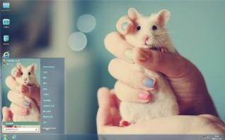 萌宠小白鼠可爱主题