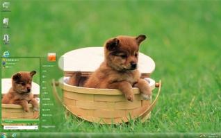 萌宠狗狗电脑主题