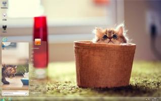 萌宠小猫咪桌面主题