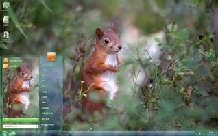 芬兰野生动物松鼠可爱主题