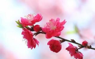 暖春天自然风景桌面壁纸