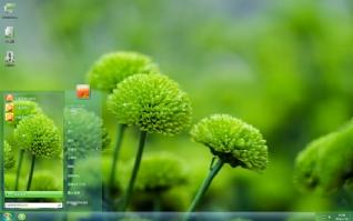绿色菊花清新摄影主题