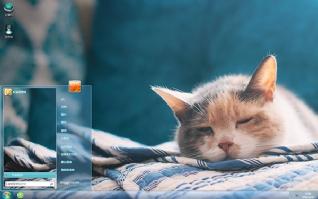 呆萌慵懒猫咪可爱桌面主题