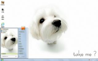 可爱白色萌狗桌面主题