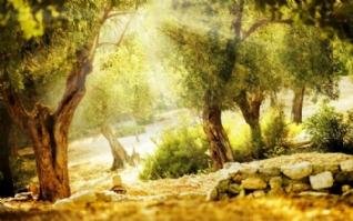 童话世界美景图片桌面壁纸下载
