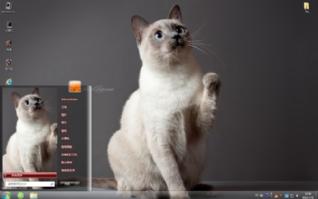 可爱的猫咪win7主题