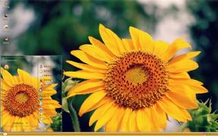 清新唯美向日葵风景xp主题