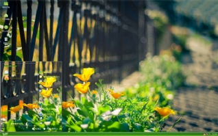 清新阳光花朵xp主题