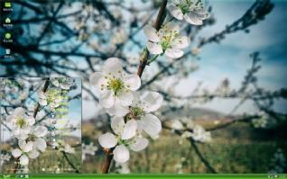 清新唯美花朵摄影xp主题