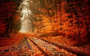 丛林铁轨唯美秋季风景壁纸