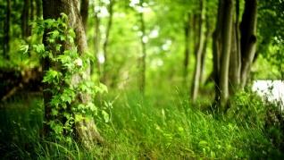 森林一角绿色养眼壁纸