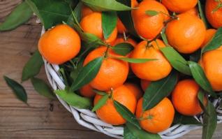 清新诱人橘子桌面壁纸