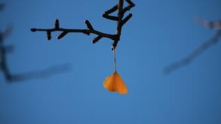 一叶知秋银杏叶桌面壁纸