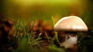 清新小蘑菇高清护眼壁纸