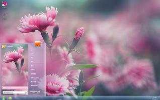 清新养眼粉色花朵win7主题